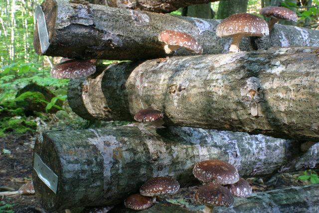 Gourmet Mushroom Growing