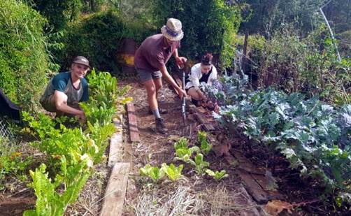 WWOOFers working on vegetable farm